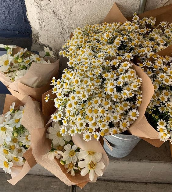 Bouquet de marguerites au printemps