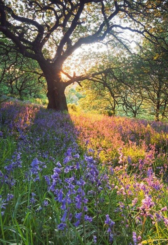 Une forêt et un champ de fleurs au printemps
